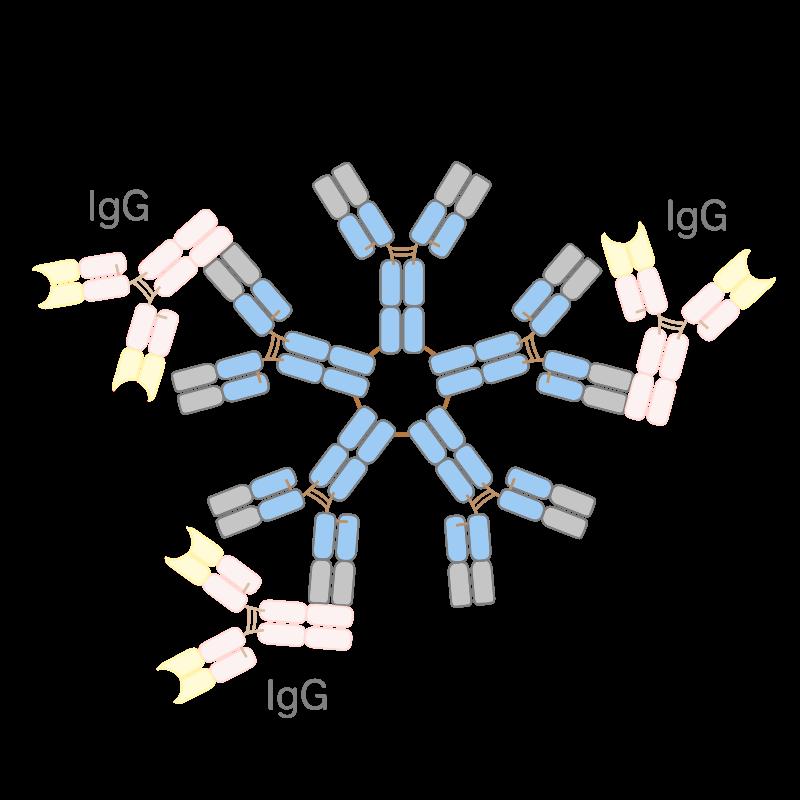 リウマチ因子(RF)陽性 | 築地リウマチ膠原病クリニック